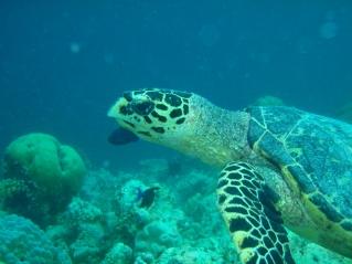 snorkel die niet boven water hoeft te blijven